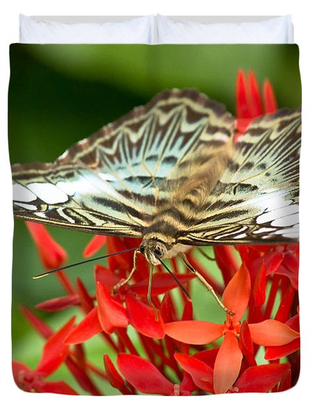 Clipper Butterfly Duvet Cover by Scott Carruthers
