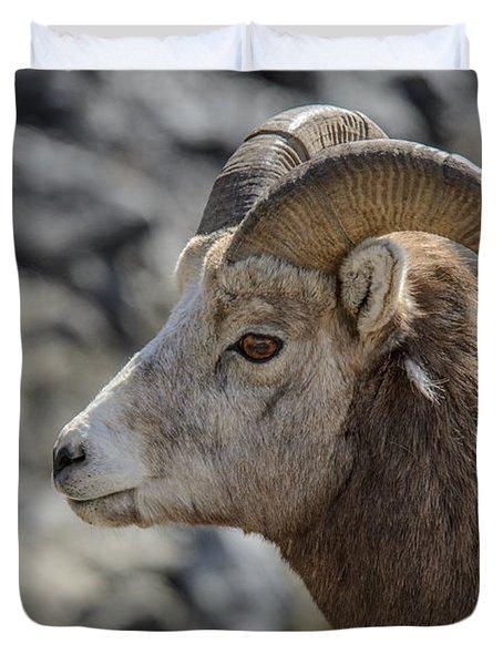 Close Big Horn Sheep  Duvet Cover
