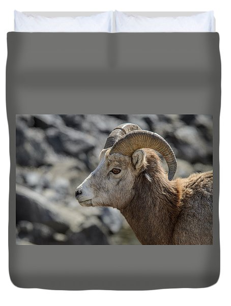 Close Big Horn Sheep  Duvet Cover