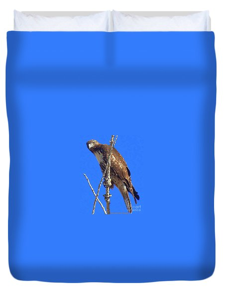 Hawk Close Up  Duvet Cover