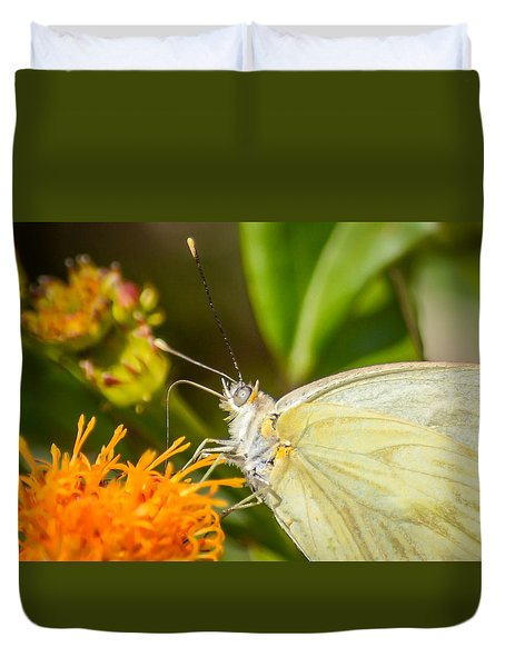 Butterfly Attracted To Mexican Flame Duvet Cover by Debra Martz