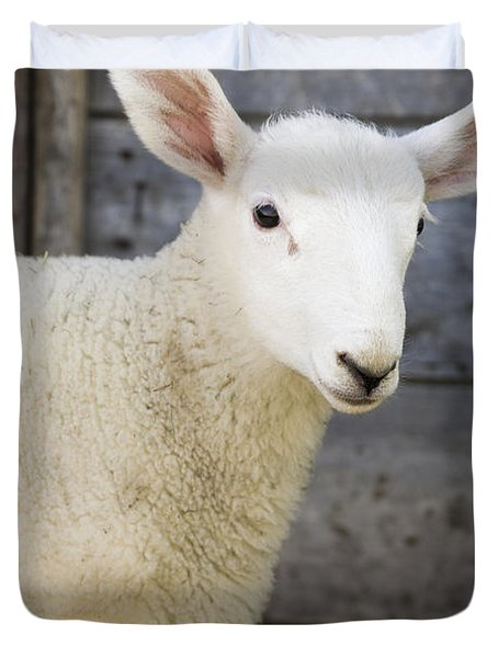 Close Up Of A Baby Lamb Duvet Cover