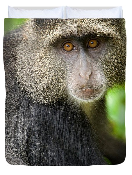 Close-up Of A Blue Monkey Cercopithecus Duvet Cover