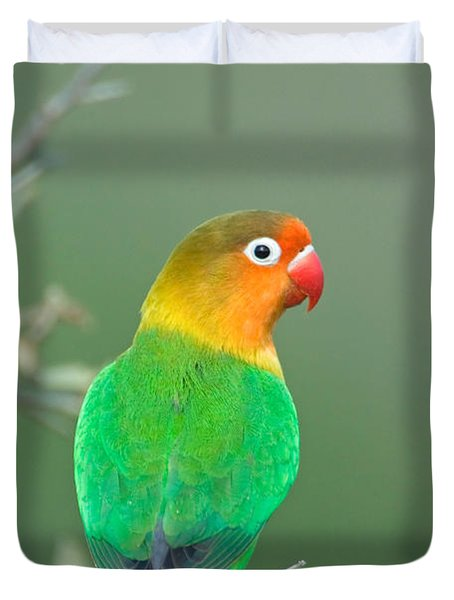 Close-up Of A Fischers Lovebird Duvet Cover by Panoramic Images