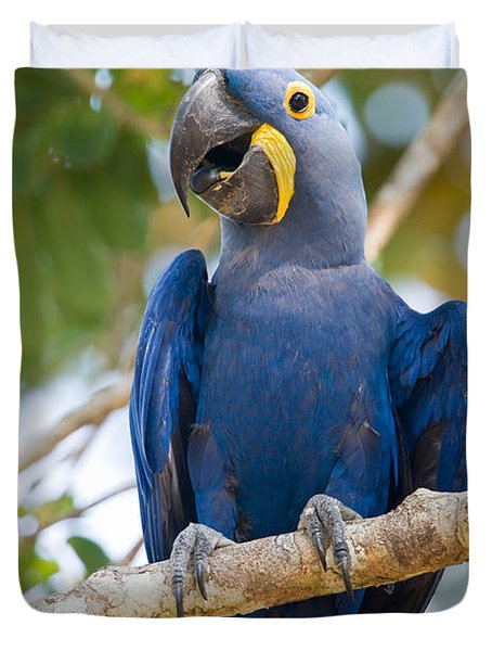 Close-up Of A Hyacinth Macaw Duvet Cover