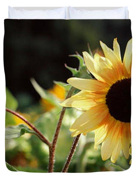 Close-up Of Sunflowers Helianthus Annuus Duvet Cover