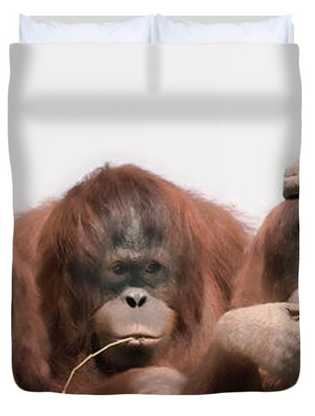 Close-up Of Three Orangutans Duvet Cover by Panoramic Images
