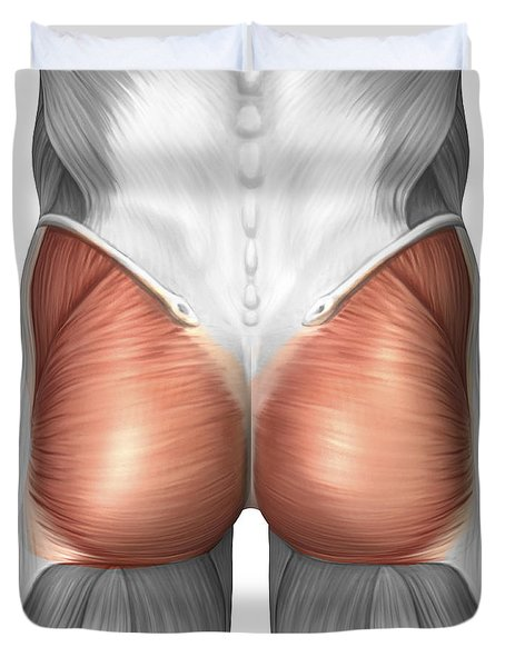Close-up View Of Human Gluteal Muscles Duvet Cover by Stocktrek Images