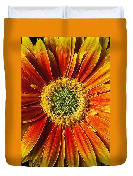 Close Up Yellow Orange Mum Duvet Cover by Garry Gay