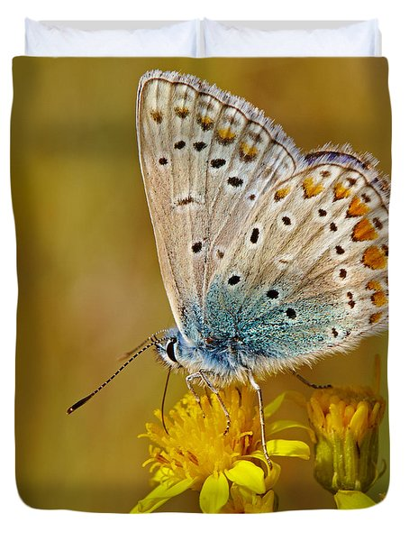 Closeup Of A Common Blue Butterfly Duvet Cover