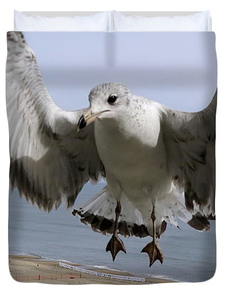 Closeup Of Hovering Seagull Duvet Cover