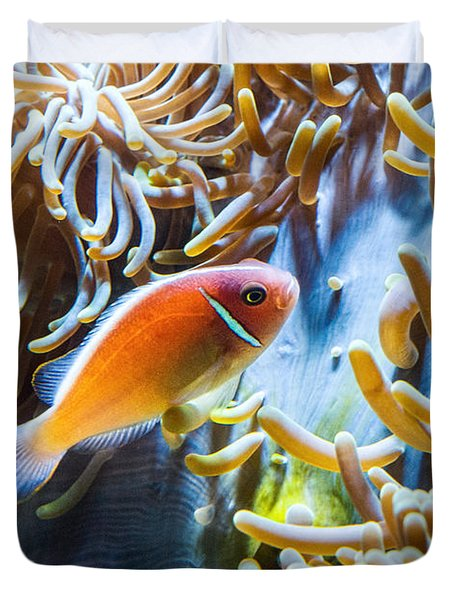 Clown Fish - Anemonefish Swimming Along A Large Anemone Amphiprion Duvet Cover by Jamie Pham