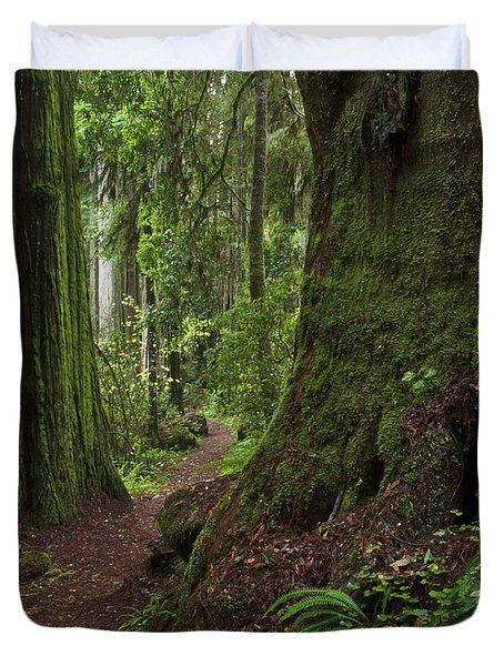 Coast Redwoods And Path Redwood Natl Duvet Cover