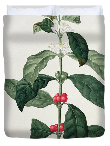 Coffea Arabica From Phytographie Duvet Cover