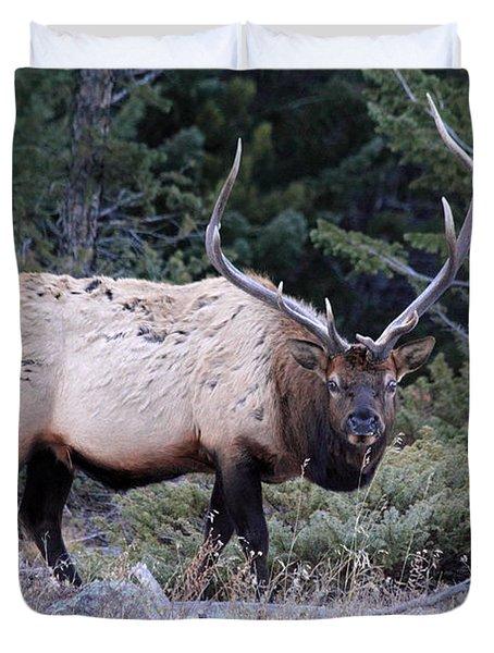 Colorado Bull Elk Duvet Cover