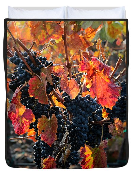 Colorful Autumn Grapes Duvet Cover by Carol Groenen