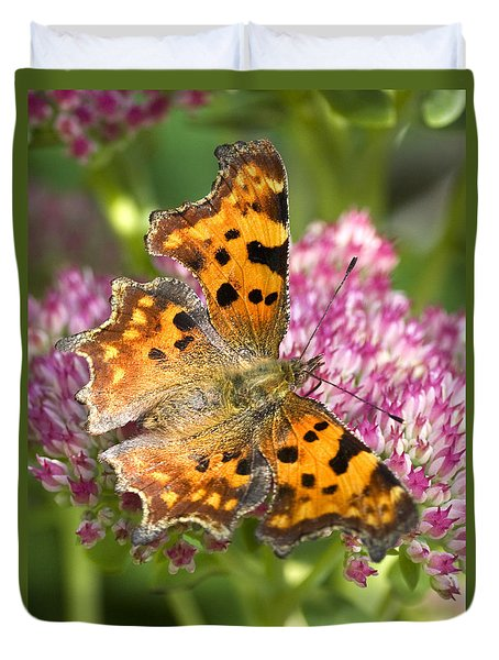 Comma Butterfly Duvet Cover by Richard Thomas
