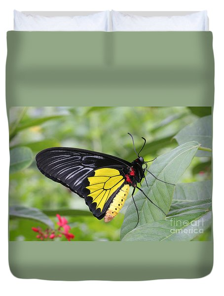 Common Birdwing Butterfly Duvet Cover by Judy Whitton