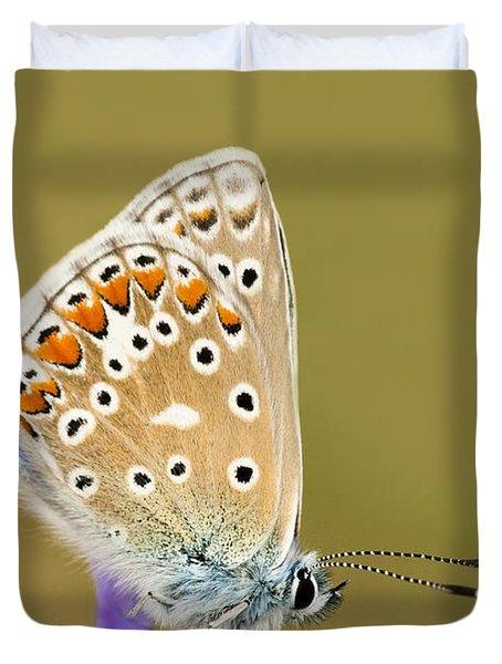 Common Blue Duvet Cover by Anne Gilbert