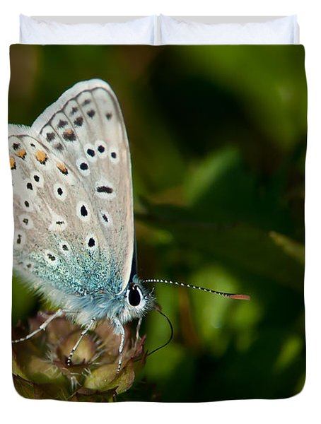 Common Blue II Duvet Cover