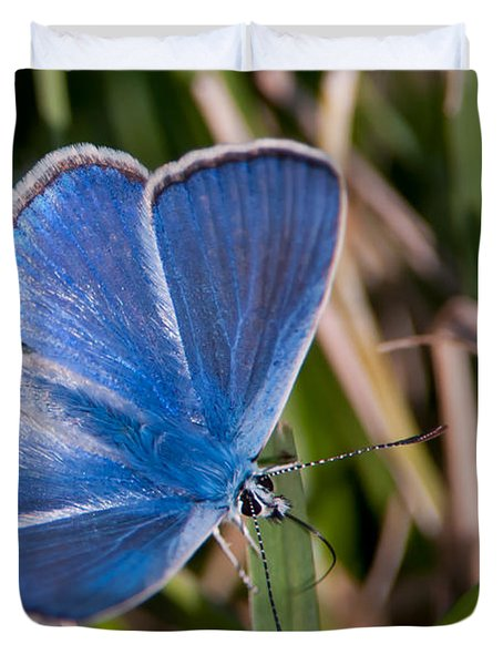 Common Blue Duvet Cover