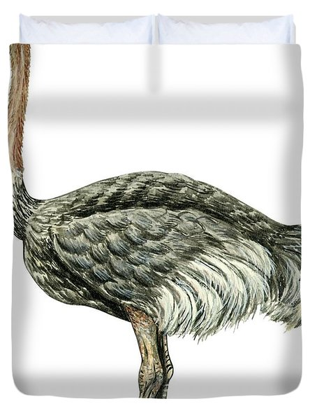 Common Ostrich Duvet Cover by Anonymous
