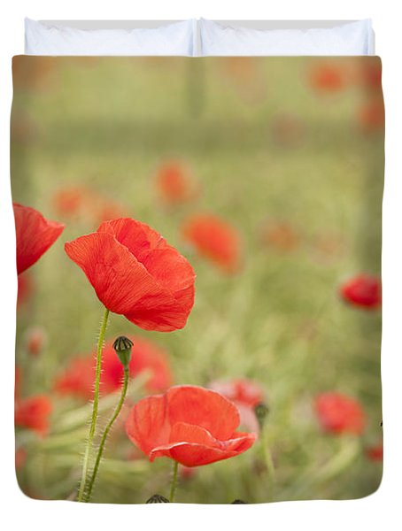 Common Poppies Duvet Cover by Anne Gilbert