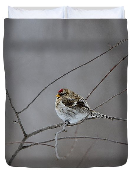 Duvet Cover featuring the photograph Common Redpoll by David Porteus