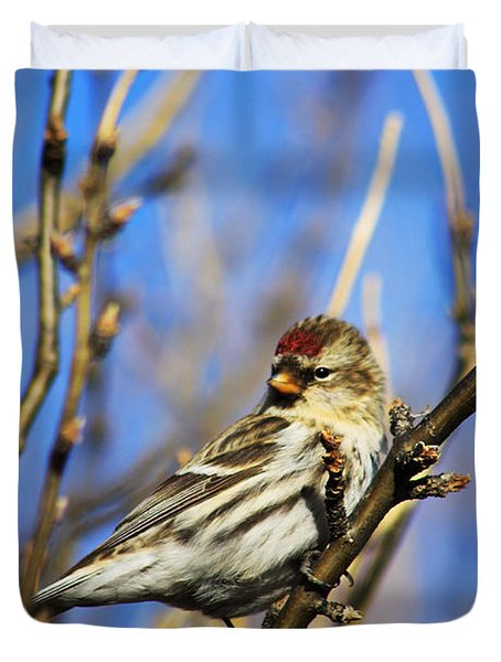 Common Redpoll Female Duvet Cover by Alyce Taylor