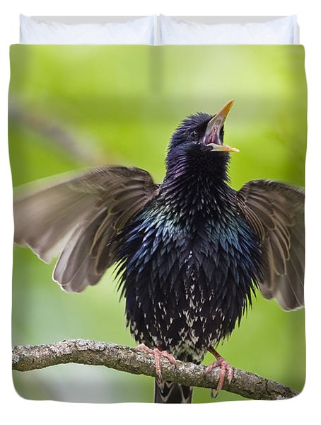 Common Starling Singing Bavaria Duvet Cover