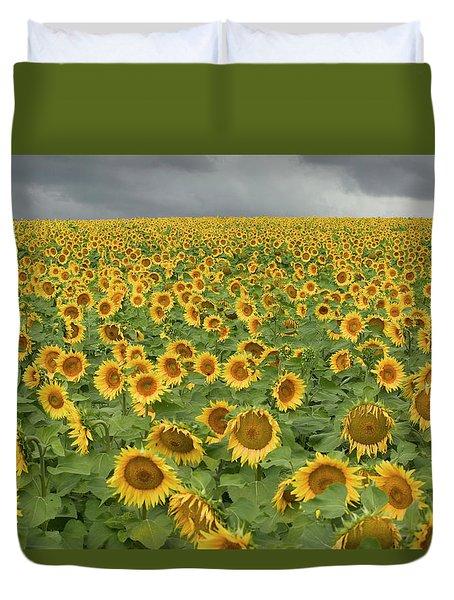 Common Sunflower Helianthus Annuus Duvet Cover