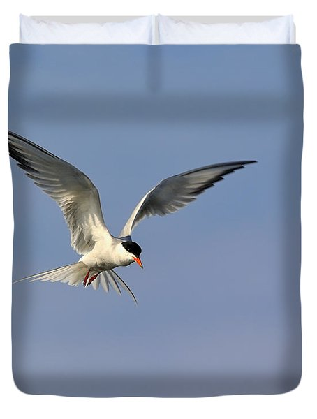 Common Tern Hovering Duvet Cover by Tony Beck