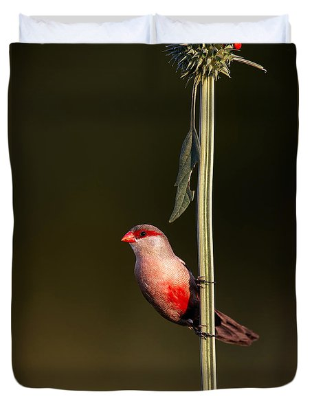 Common Waxbill Duvet Cover