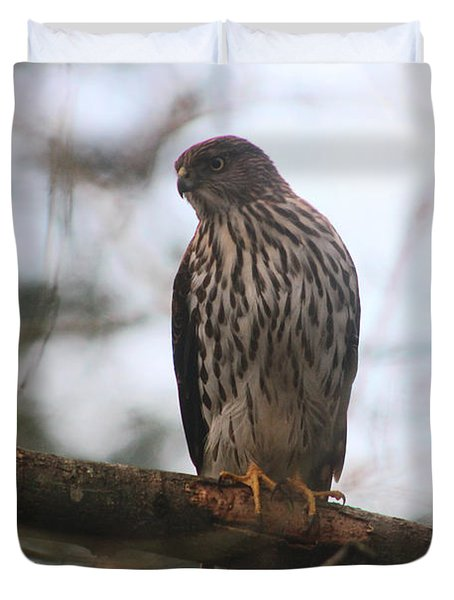 Cooper's  Hawk Dines Here Duvet Cover by Kym Backland