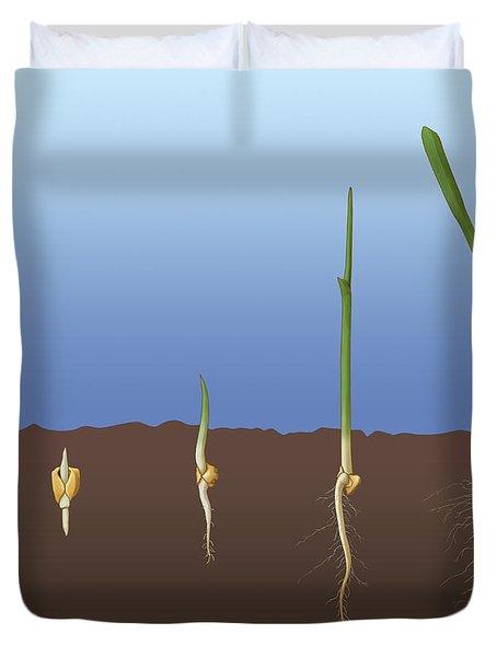 Corn Seed Germination, Illustration Duvet Cover