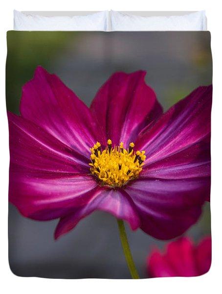 Cosmos Flower Duvet Cover by Arlene Carmel