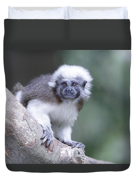 Duvet Cover featuring the photograph Cotton Top Tamarin  by Shoal Hollingsworth