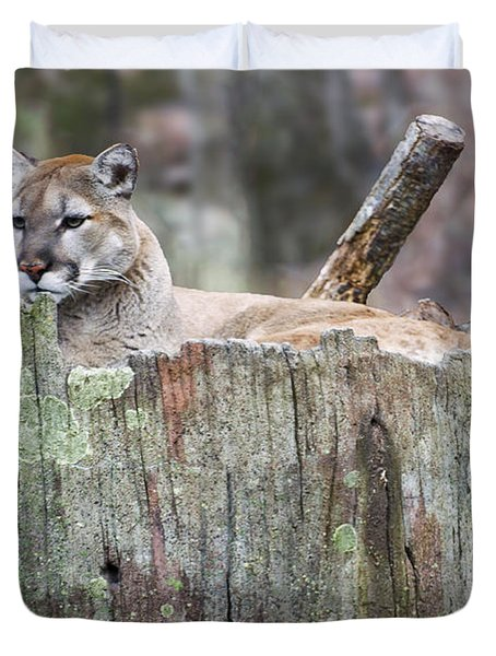Cougar On A Stump Duvet Cover by Chris Flees