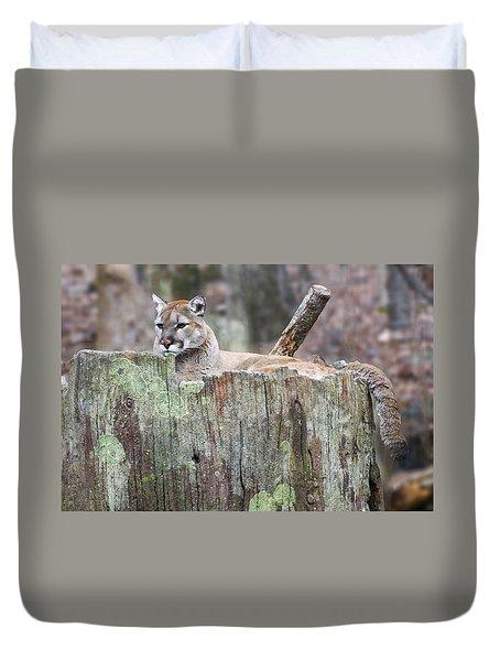 Cougar On A Stump Duvet Cover