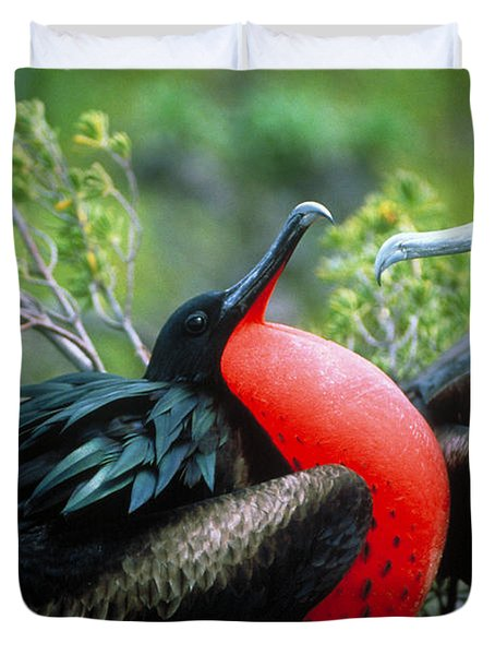 Courting Great Frigatebirds Duvet Cover