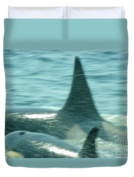 Cow Orca And Her Calf Duvet Cover by Jeff Swan