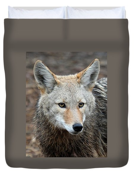 Coyote Duvet Cover by Athena Mckinzie