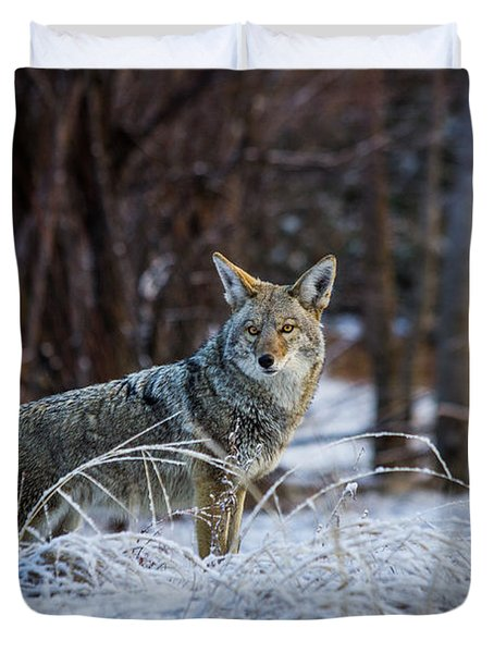Coyote In The Meadow  Duvet Cover