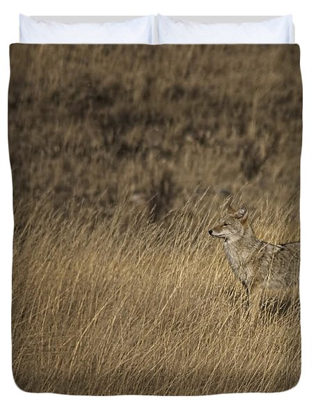 Coyote Standing In Field Of Dried Duvet Cover by Roberta Murray
