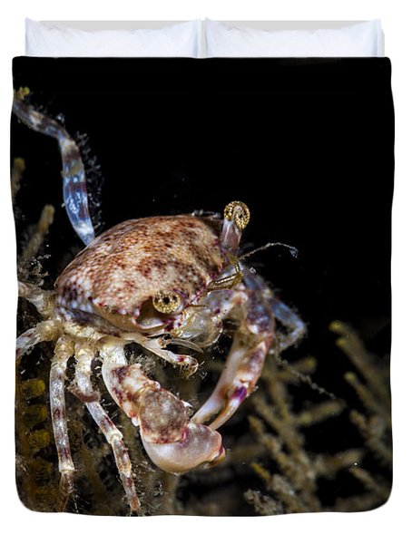 Crab Sitting At Night Duvet Cover