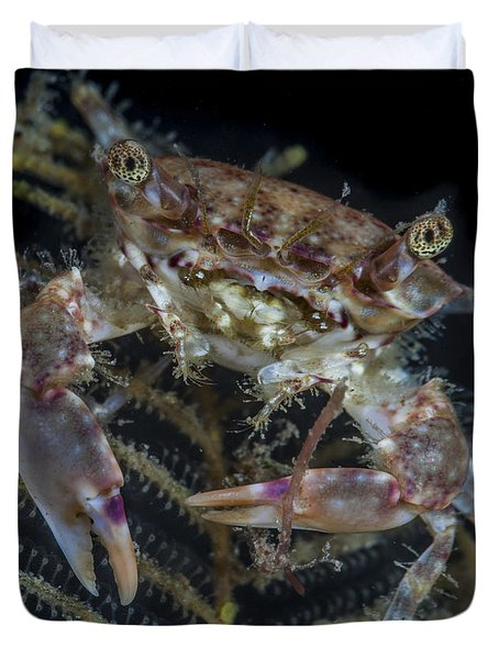 Crab Staring At You Duvet Cover
