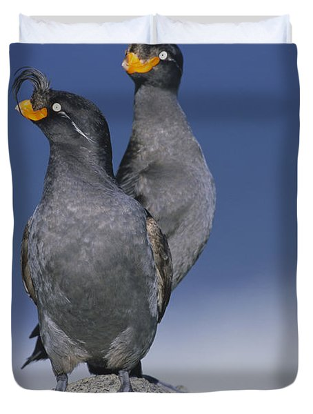 Crested Auklet Pair Duvet Cover by Toshiji Fukuda
