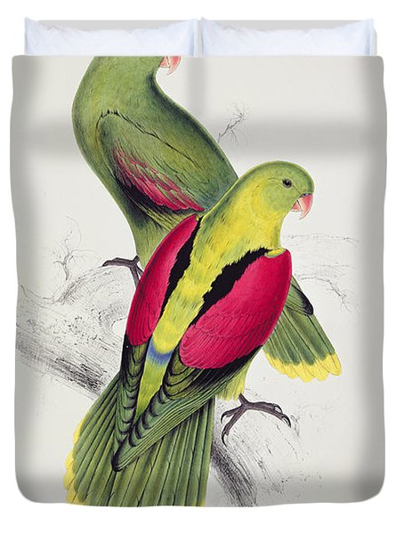 Crimson Winged Parakeet Duvet Cover by Edward Lear