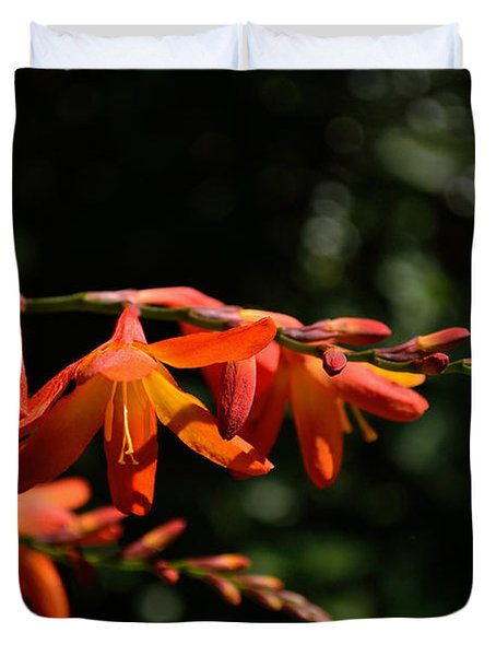 Crocosmia 'dusky Maiden' Flowers Duvet Cover