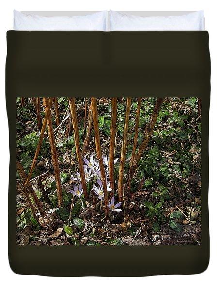 Crocuses And Raspberry Canes Duvet Cover
